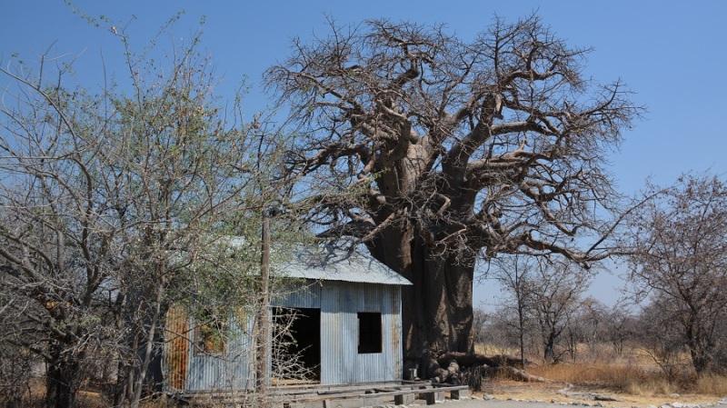 namibija-in-bocvana-2016-3470
