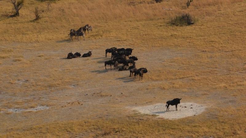 namibija-in-bocvana-2016-3556