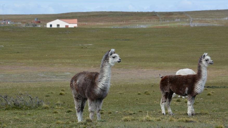 Argentina, Cile in Bolivija 2017 (1465)